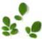 Green moon herbal